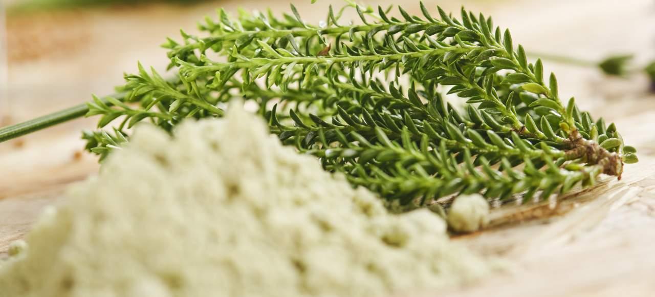 Obiščite kmetijo Plavica in spoznajte zdravilne rastline Jožeta Majesa